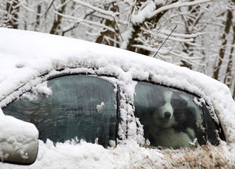 A dog is seen in a snow covered car in Budapest