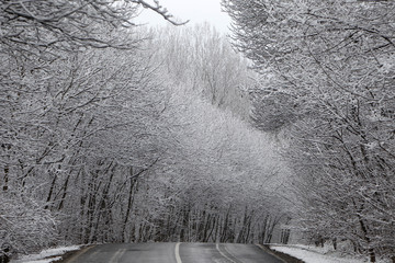 Snow covered trees are seen near the village of Etyek