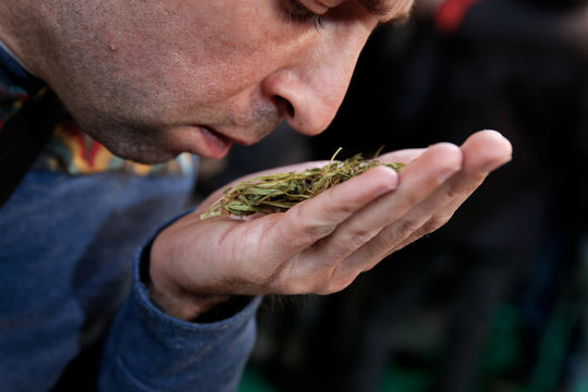 A visitor smells a cannabis bud during the 1st International Cannabis Expo, in Athens