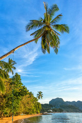 Beautiful palm view on the idyllic beach, Philippines