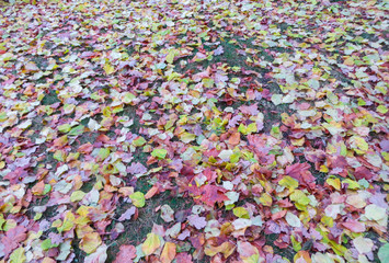 The last breath of autumn. Different-colored leaves on the ground.