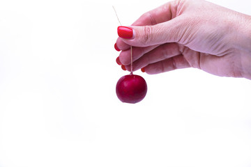 One radish in hand isolated on a white surface