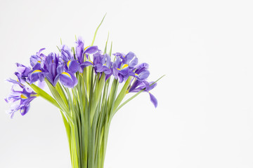 Holiday greeting card for Valentine's Day, Woman's Day, Mother's Day, Easter! Violet Irises xiphium in the vase