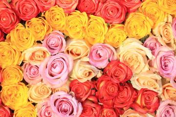 In de dag Roses Mixed wedding roses