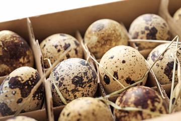 Quail eggs in package, closeup