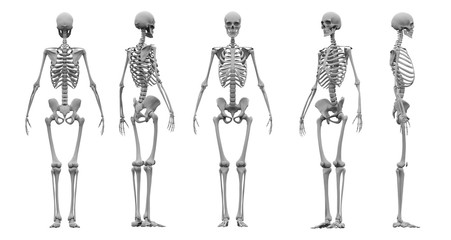 Human skeleton set 3d rendering.