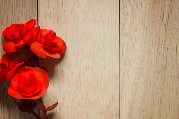 Red rose on wooden background. Image of Valentines day.