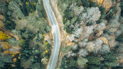 Yedigoller Bolu, Autumn Forest Road from a Drone View