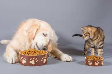 Dog and cat eating