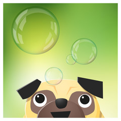 Hello Spring season background with pug dog looking at soap bubbles , vector , illustration
