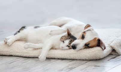 Spoed Fotobehang Hond Cat and dog sleeping
