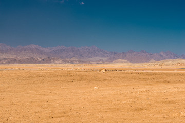 Desert, Sinai mountains and sky in Egypt.