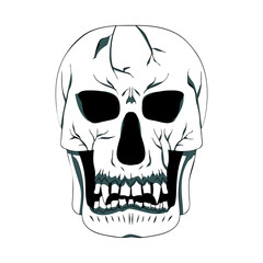 Contour silhouette of the skull. Vector illustration. Hand drawing.