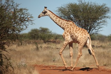 Animals of South Africa National Parks