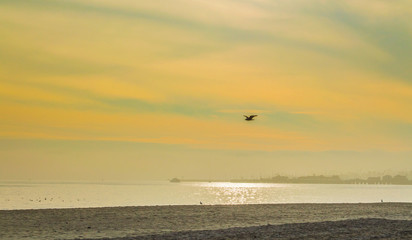 golden, smoky sky with sun shimmering on water and bird flying at a beach in Santa Barbara, California