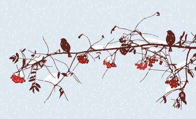 Birds on a rowan branch in winter