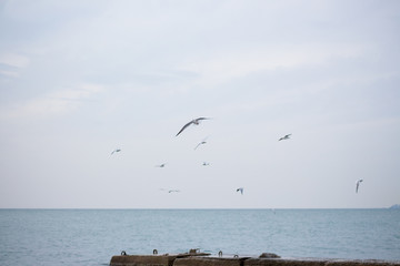Hungry seagulls diving into the sea for fish