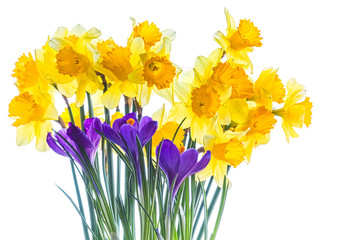 Spring bouquet of daffodils and crocuses on a white background