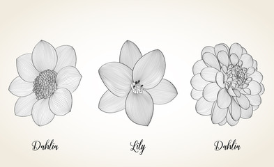 Set of hand-painted flowers of lilies and dahlias.