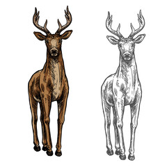 Elk hind vector sketch wild animal isolated icon