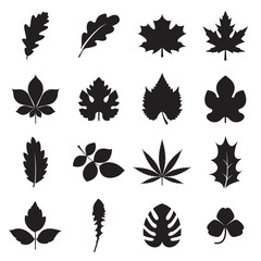 Leaf icons. 16 black symbols of leaves, such plants as oak, maple, chestnut, grapes, fig, hemp, holly, dandelion, clover, palm, etc. isolated on a white background. Vector illustration