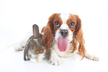Funny animal dog photo. Funniest animals pets dogs. Rabbit bunny lop and puppy together. Animal friends, real friendship.