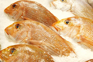 Image of whole snapper sell at fish market. Close up snapper fish in detail with fish scale.Selective focus on snapper display can use as background.