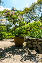 Botanischer Garten mit Blumen und Planzen