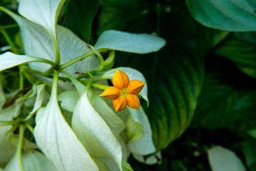 gelb orange Blume