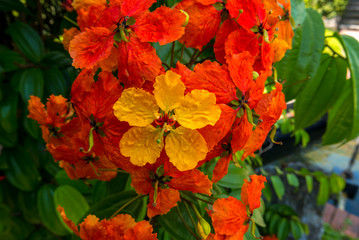 tropische orange Blume
