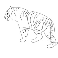 vector, isolated sketch of a tiger is standing