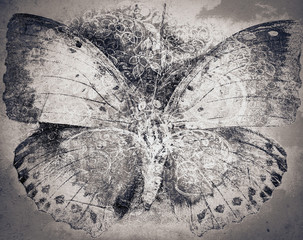 grunge butterfly background texture