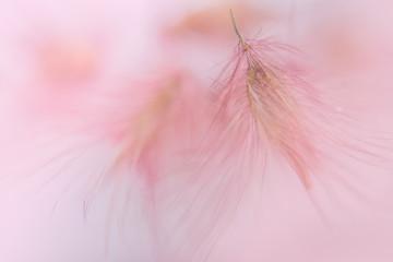 Pink wild flower macro background image