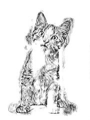 A sketch of a cat art illustration