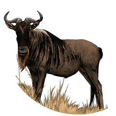 the bull stands in the dry grass sketch vector graphics color picture