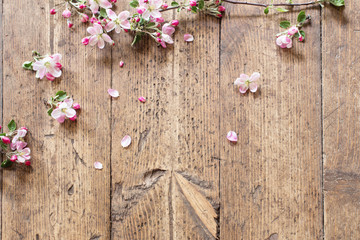 pink spring flowers on old wooden background
