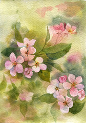 watercolor pink apple blossoms