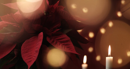 christmas flower with lights around. Sweet home ambient, decoration christmas light