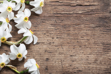 narcissus on wooden background