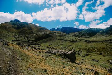 Sheep in Huayhuash