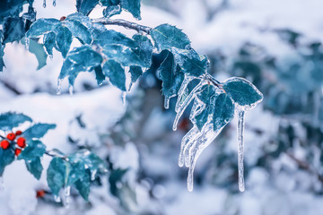 Green leaves covered with ice. Abnormal weather in the northeastern United States. Winter view.