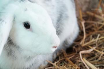 White rabbit on a manger