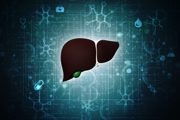Realistic human liver 2d illustration