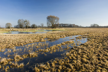 Flooded meadow, trees without leaves and cloudless sky