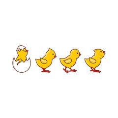 vector flat cute baby chickens walking in line, yellow small chick hatching from egg set. Flat bird animal, isolated illustration on a white background, poultry, farm organic food products design