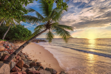 Wall Mural - Coconut palm on paradise beach and beautiful sea in tropical island at sunset. Summer vacation and holiday travel concept.