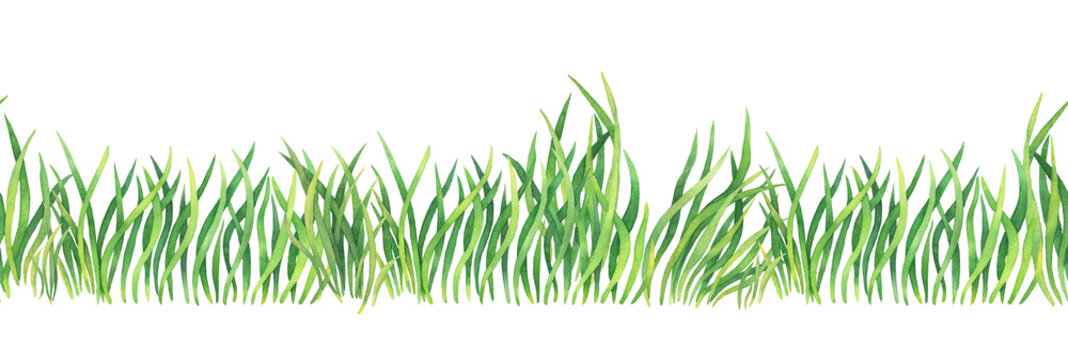Fresh green grass - seamless pattern. Watercolor hand drawn painting illustration isolated on a white background. Summer grassy element for design, nature landscape. Organic, bio, eco label and shape.