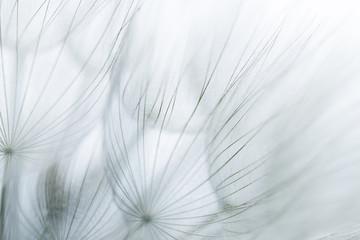 Monochromatic extreme closeup of dandelion