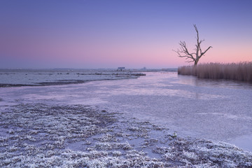 Wall Mural - Lonely tree in winter at dawn in The Netherlands