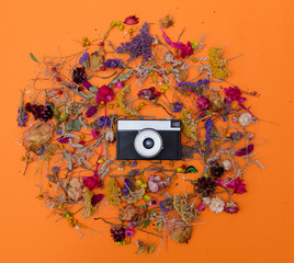 Vintage camera and herbs